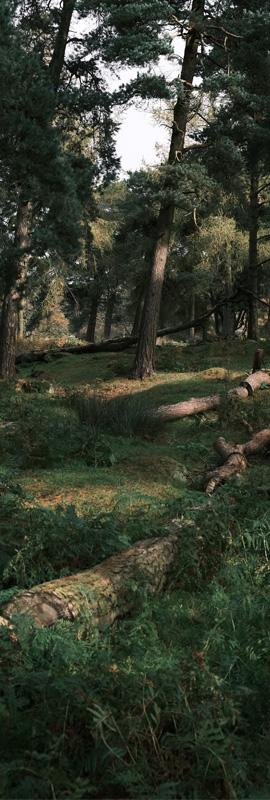Woodland photo