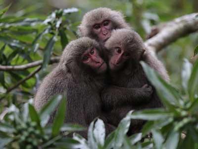 3 monkeys shot by the Canon 6D Mark II