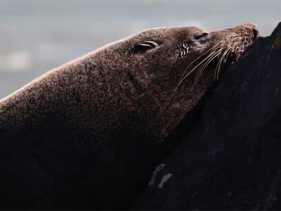Seal close up shot by the Canon 77D