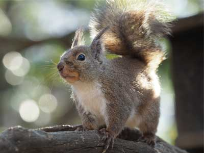 Squirrel sjot by the OMD Mark II